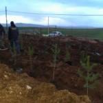 Gazlıgöl Belediyesinden Ağaçlandırma Çalışması